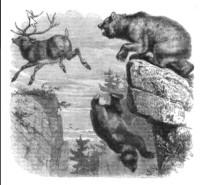 marals-leap2
